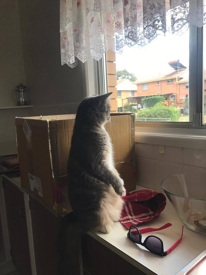 Lily had an existential moment when she saw the neighbours have chickens!